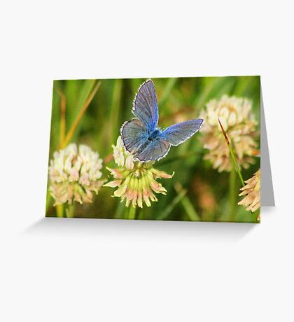 Silver Tatters Greeting Card