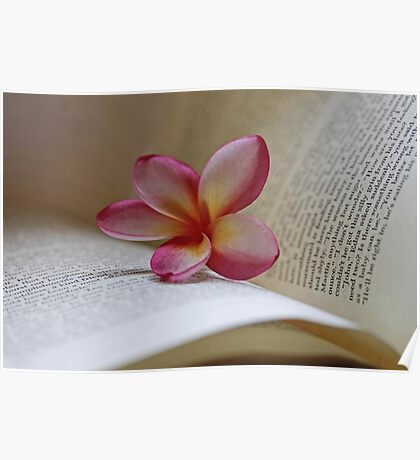 Frangipani And Book Poster