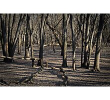 Fall Woods Photographic Print