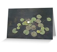 Just Chillin - A Little Turtle Relaxing on a Waterlily Leaf Greeting Card