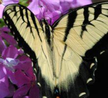 Tiger Swallowtail Butterfly on Garden Phlox Sticker