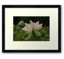 lotsa lotus Framed Print