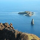 Overlooking the Pacific Ocean by Maggie Hegarty