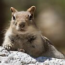 Face the squirrel by Anthony Brewer