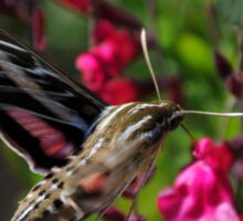 White-Lined Sphinx Moth on Salvia greggii Sticker