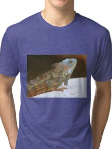 Blue head iguana Tri-blend T-Shirt