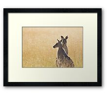Grey Kangaroos Framed Print