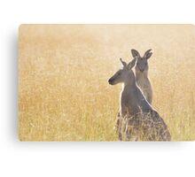 Grey Kangaroos Metal Print