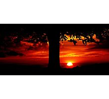 Tree in the sunset Photographic Print