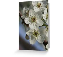 White Flower Blossoms Greeting Card