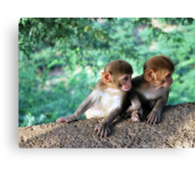 monkey twins Canvas Print