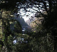 Tasmanian Gorge by bevy111