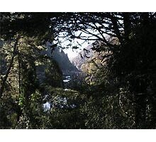 Tasmanian Gorge Photographic Print