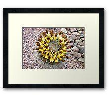 Desert Study 10  Framed Print