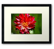 Purple Flower close up Framed Print