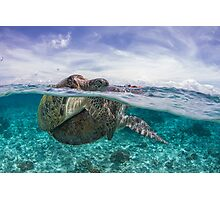 sea turtles mating split shot Photographic Print