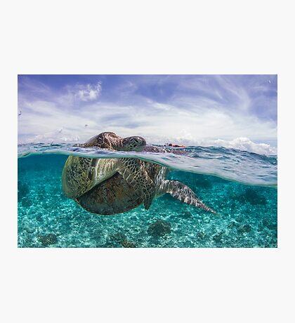 sea turtles mating split shot Photographic Print
