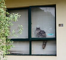 neighbourhood watch is for pussies by Georgie Hart