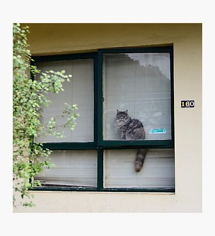 neighbourhood watch is for pussies Photographic Print