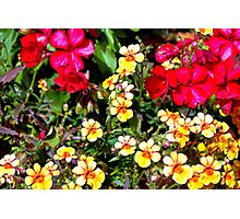 WP Floral Study 1 2014 Photographic Print