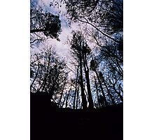 Forest Ceiling Photographic Print