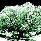 big old tree IR by BigAndRed