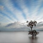 Garry's Tree Wellington Pt Qld Australia by Beth  Wode