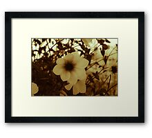 Blooms of Summers Past Framed Print