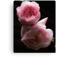Rose in Contrast Canvas Print