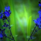 BLUE AND BEAUTIFUL by leonie7