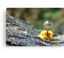 Toadstool in Woodland Setting Canvas Print