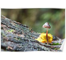 Toadstool in Woodland Setting Poster