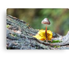Toadstool in Natural woodland Setting Canvas Print