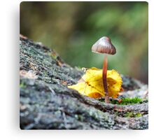 Tiny Toadstool in woodland Setting Canvas Print