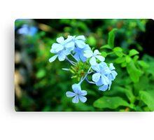 Macro Blue Flowers Canvas Print