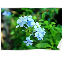Macro Blue Flowers Poster