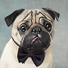 Mr Pug by Sparafuori