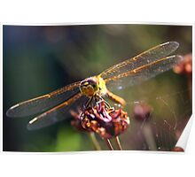 Golden Wings of A Dragonfly Poster