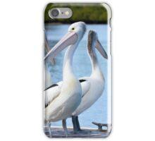 Pelicans 6663 iPhone Case/Skin