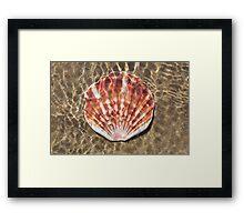 Seashell - Scallop Framed Print
