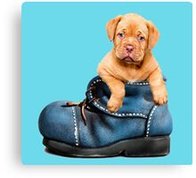 Cute Puppy In Boot Canvas Print