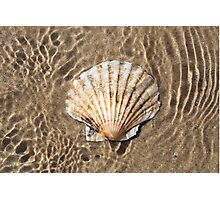 Scallop Shell Photographic Print