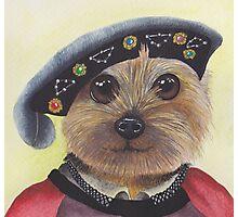 Yorkshire Terrier Henry VIII Photographic Print