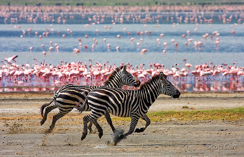 Racing Stripes by Scott Carr