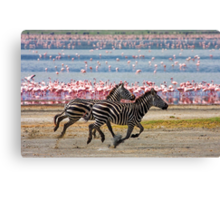 Racing Stripes Canvas Print
