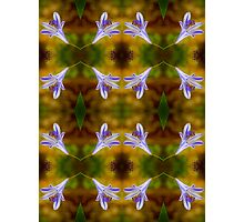 Agapanthus Pattern Photographic Print