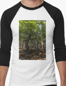 Venerable Forest Guardian - an Ancient Beech Tree Guarding a Pine Forest Men's Baseball ¾ T-Shirt