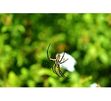 Writing Spider Photographic Print