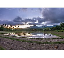 Rice field during sunset Photographic Print