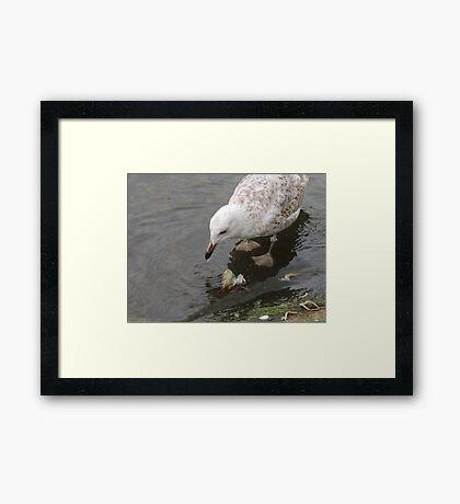 My Crab Framed Print